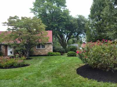 landscaped yard with clean cut grass and mulch